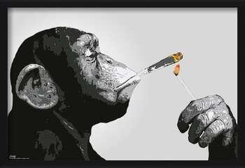 Ingelijste poster Steez - Monkey Smoking